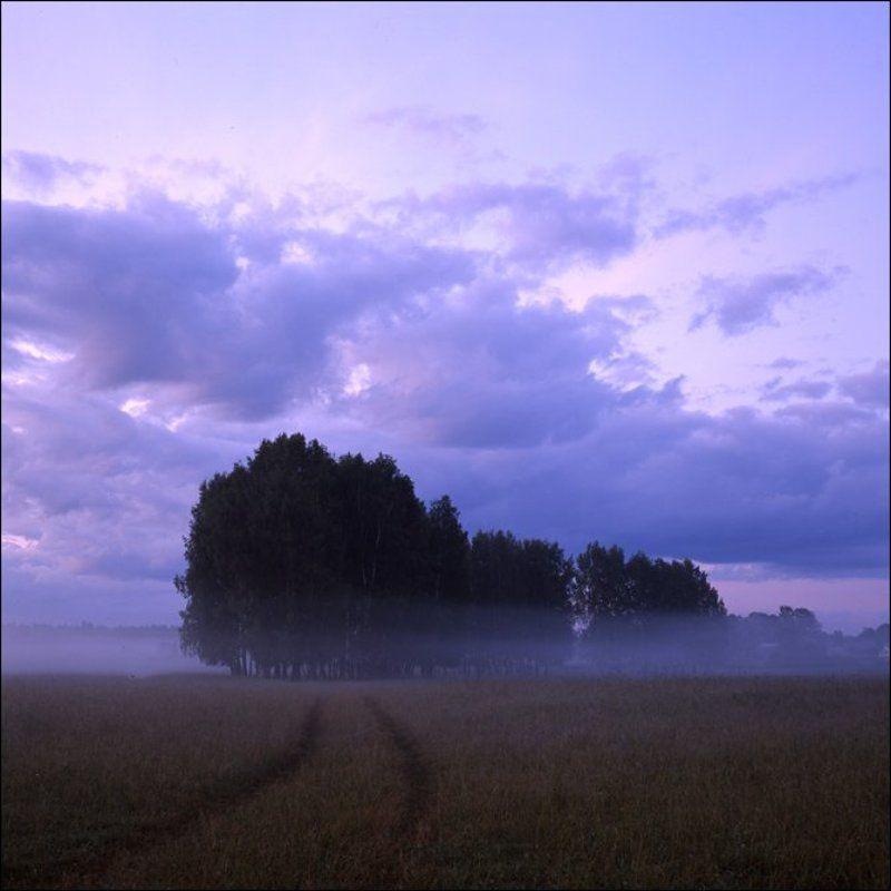 Летняя утренняя слайдовая картинка с дорогой и березами в поле у Скомороховоphoto preview