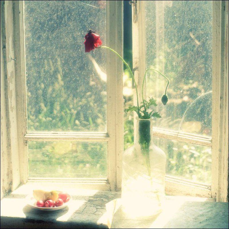 Летняя квадратная весьма цветная картинка с маком и сливами на окне в Овсяниковоphoto preview