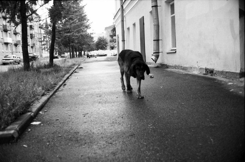 собачья, жизнь Бродягаphoto preview