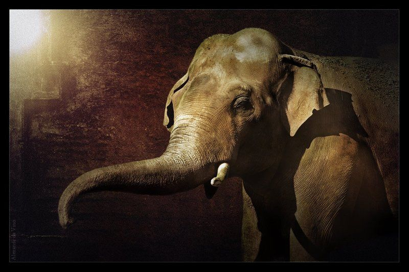 красивый слон, elephant, слон, слонопотамчик ***photo preview