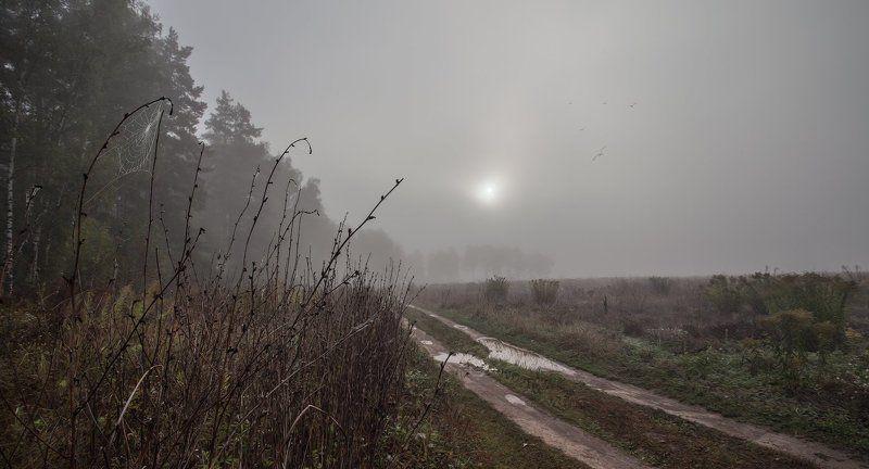 Купавна, луг, осень, туман Здравствуй, сентябрьphoto preview