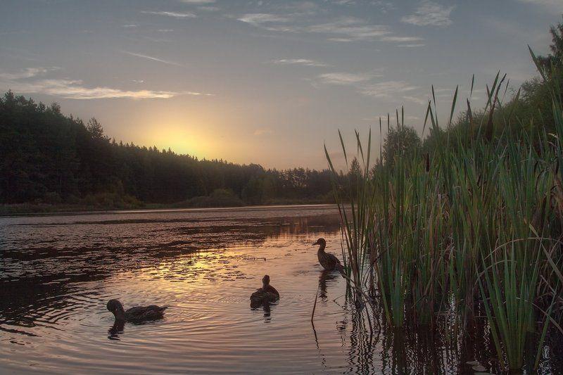 Бугрово, Псковская область, Лето, Пруд Встречаем солнышкоphoto preview