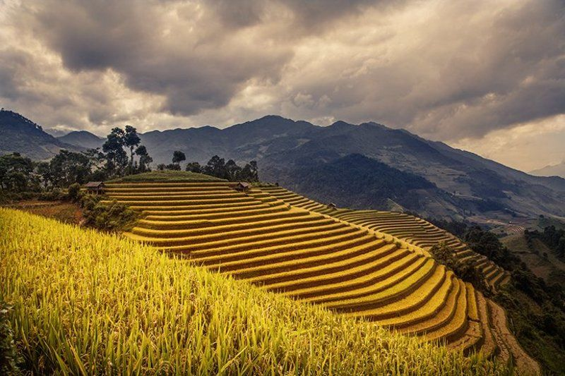 Terraced fields in Mu Cang Chaiphoto preview