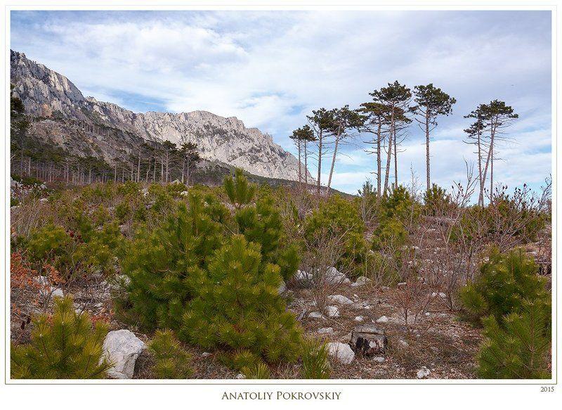 анатолий покровский, весна, горы, камни, крым, облака, сосны Меж близким малым и огромным далёкимphoto preview
