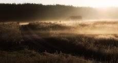 В плену у тумана