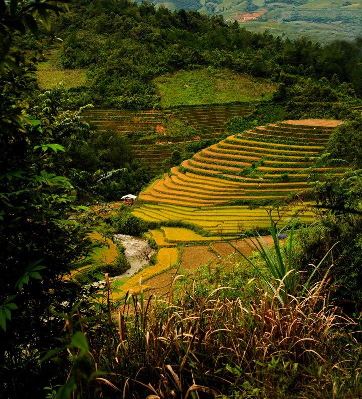 haquangi2k, Vietnam