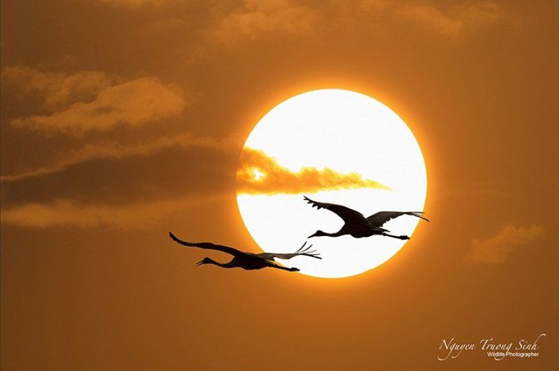 Cranes coming homephoto preview