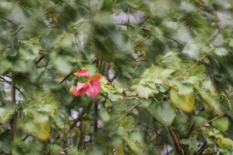осень листья  Первый лист осениphoto preview