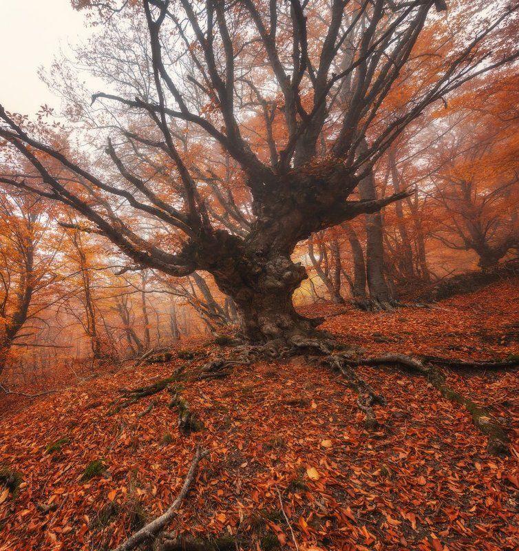 демерджи, крым, лес, осень, туман Монстроphoto preview