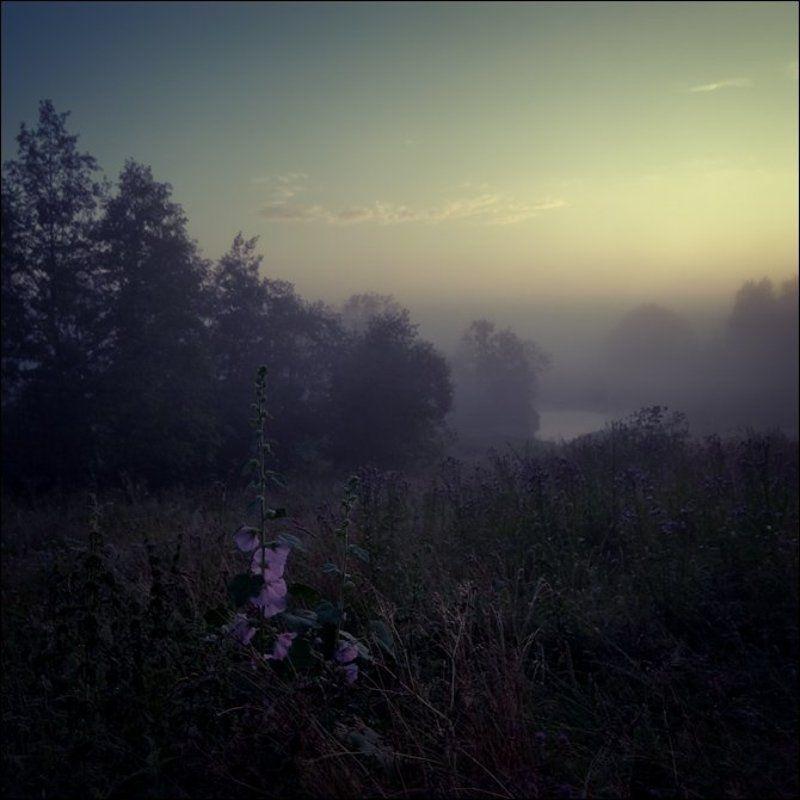 Летняя рассветная квадратная цветная картинка с фиолетовыми цветами над речкой в Кузнецовоphoto preview