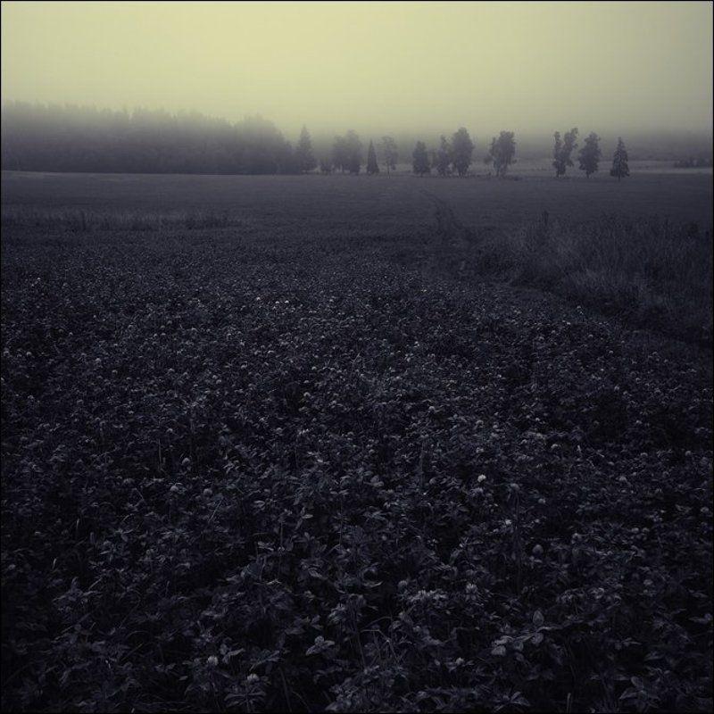 Желтоватая чб квадратная картинка с деревьями за клевером утром в Алексеевскомphoto preview