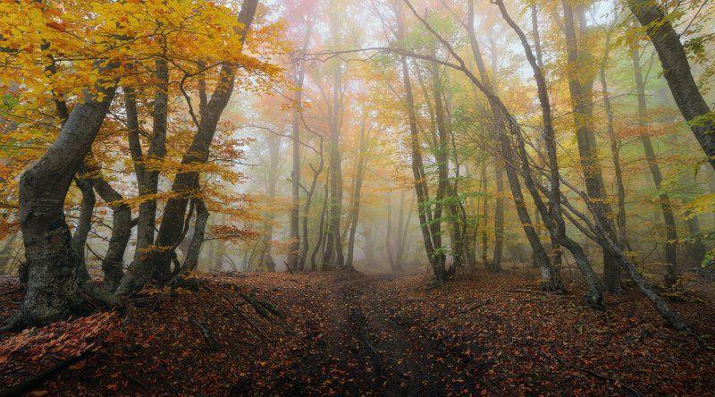Осень в буковом лесу на Демерджиphoto preview
