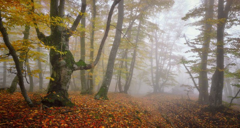 В осеннем лесу Демерджиphoto preview