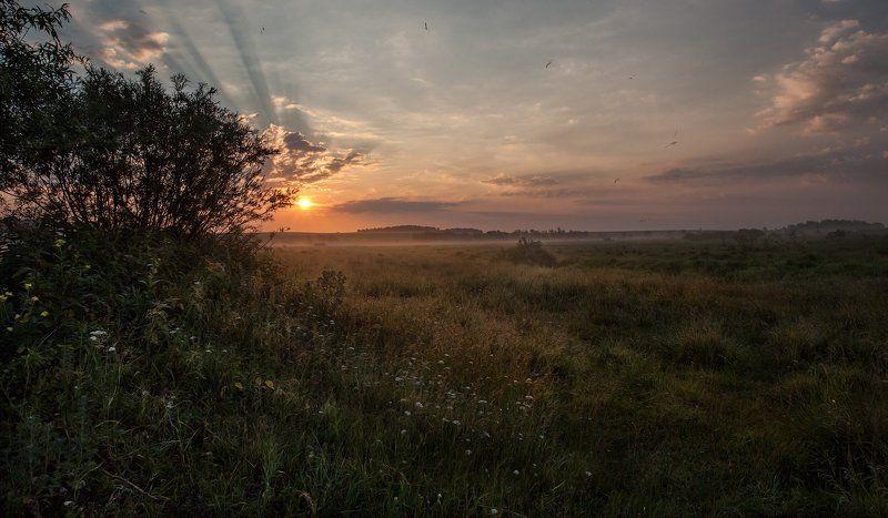 Пушкарёво, Утро, Лето, Дорогобуж Солнечный выстрелphoto preview