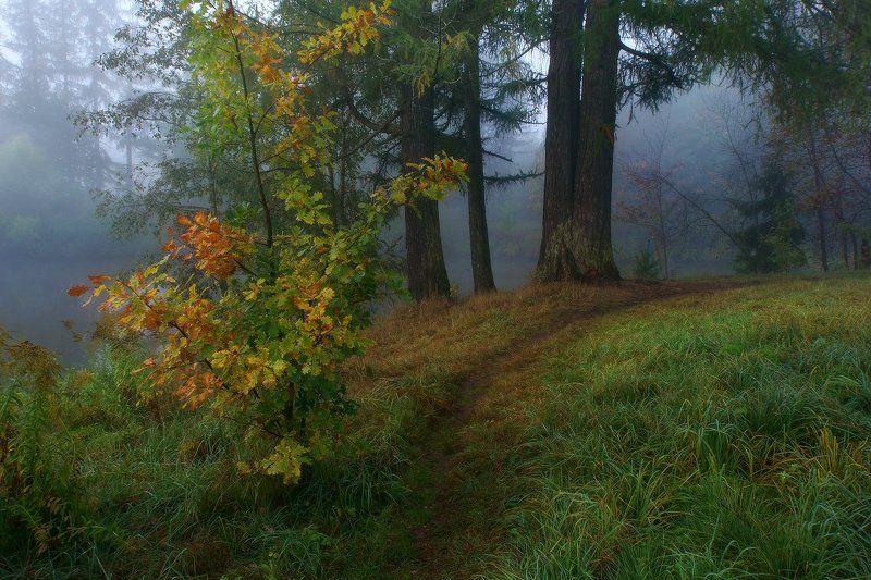 Тропинка в туманphoto preview
