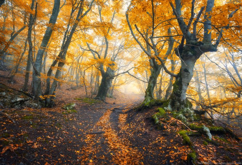 пейзаж, природа, лес, туман, облака, крым, осень, деревья, демерджи Буковый лес на Демерджи (Крым). Часть 1photo preview