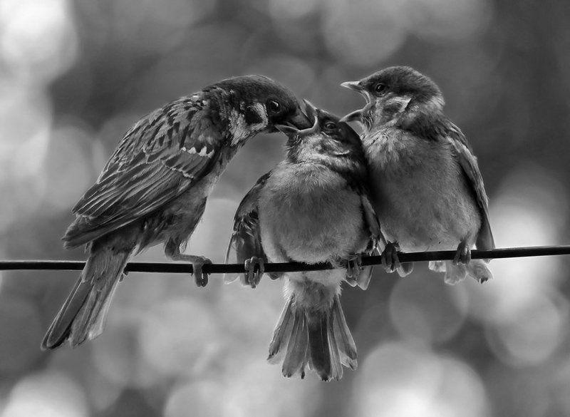 птицы, воробьи В порядке очередиphoto preview