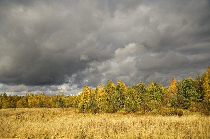 осень,природа,облака,небо,поля,лес,свет,тень Осенние мотивыphoto preview