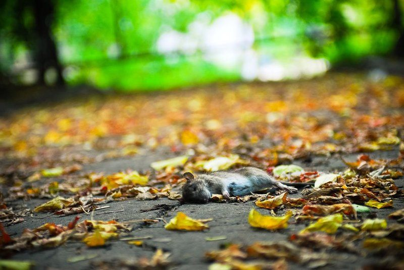 В последнюю осень...photo preview
