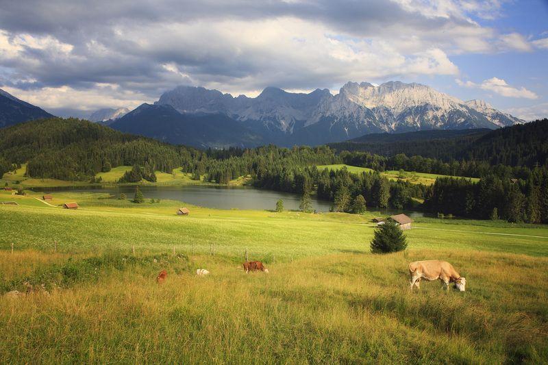 Бавария, Горы, Корова, Луг Альпийские лугаphoto preview