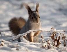 Маленькой белке холодно зимой