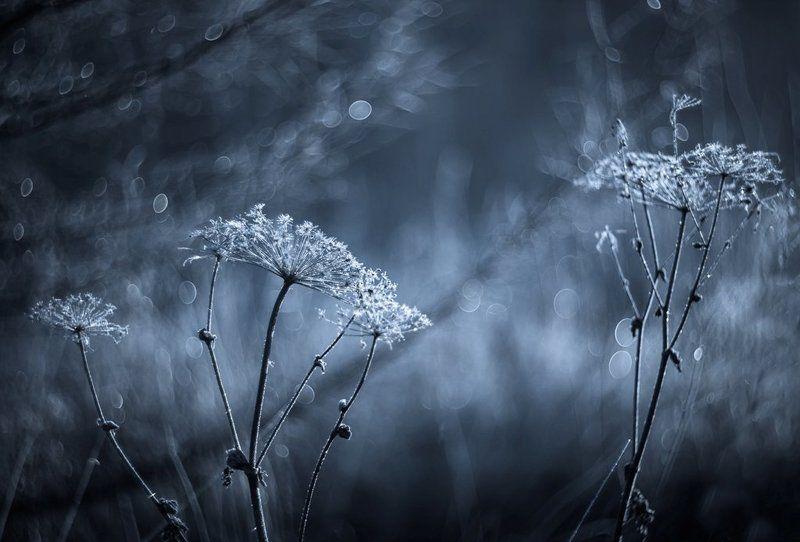 Осенние заморозки...photo preview