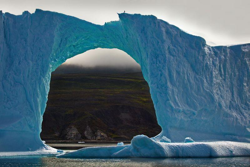Гренландский арканоидphoto preview