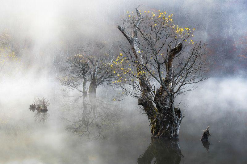 Autumn, Fog, Jusanji, Korea, Life, Mist, Morning, Nature, Reflection, Tree, Willow Tree of lifephoto preview