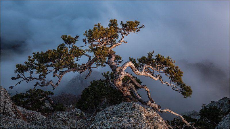 горы, демерджи, крым Крымский бонсай.photo preview