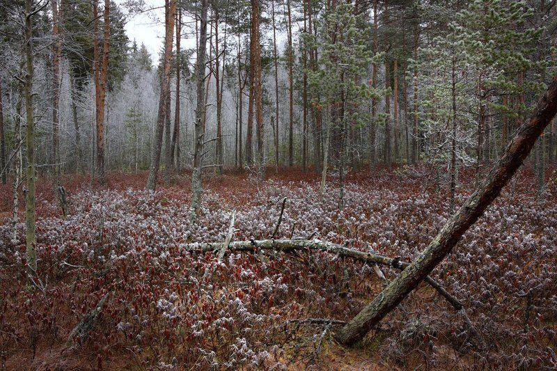 На рубеже зимыphoto preview