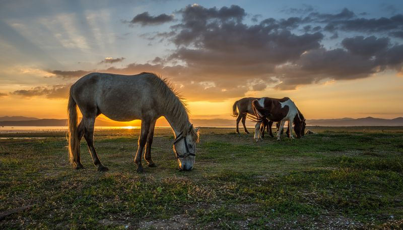 adventure, amazing, animal, autumn, background, beautiful, color, dawn, domestic, evening, fantastic, farm, field, fog, haze, herd, holiday, horse, landscape, majestic, mammal, mare, meadow, mist, morning, mustang, natural, nature, outdoor, pasture, pet,  Horses grazing on pasturephoto preview