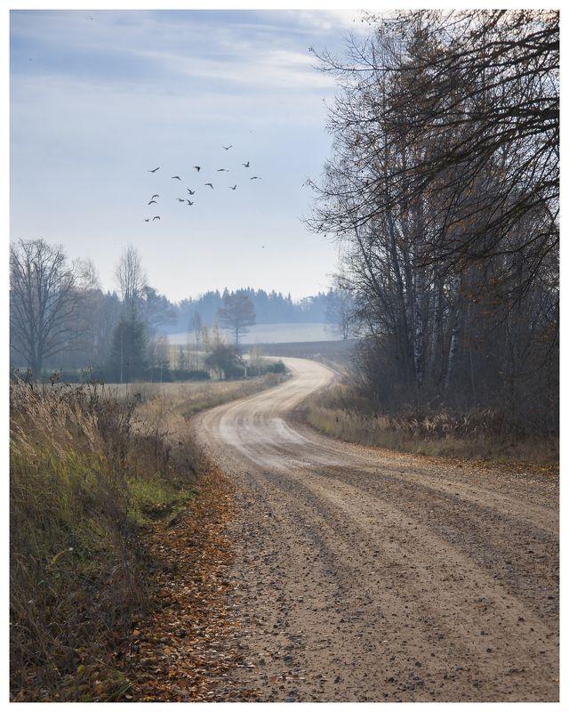 латвия осень утро осенняя зарисовка photo preview