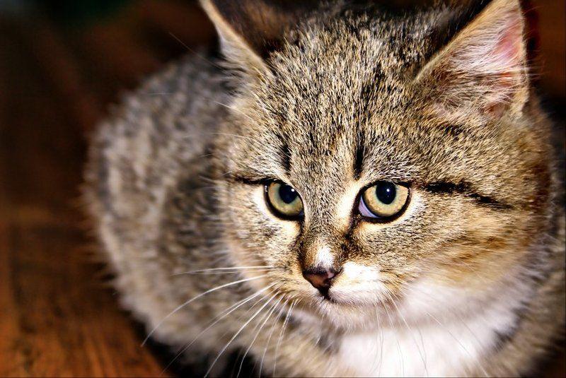 котенок Котята, коты и кошки - все по-немножкуphoto preview