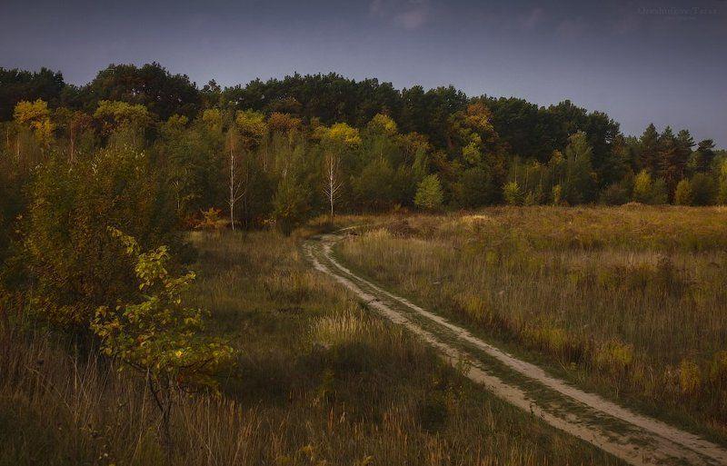 лес, осень, пейзаж, поле, природа осеньphoto preview