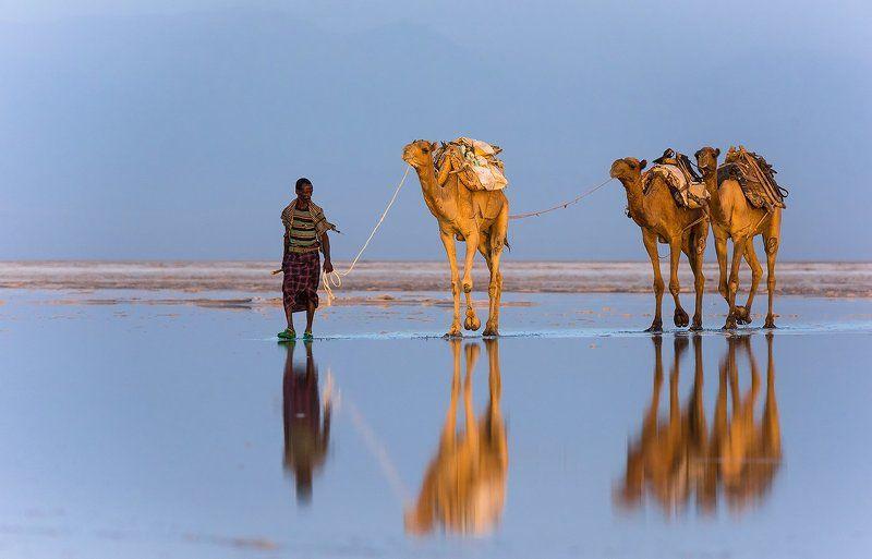 Верблюды, Караван, Соль, Эфиопия Соленое Озероphoto preview