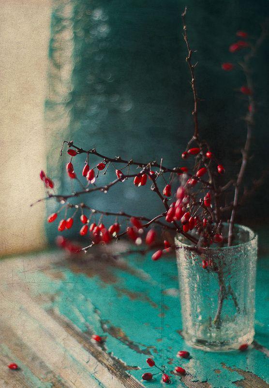 осень капли ягоды  Барбарис photo preview