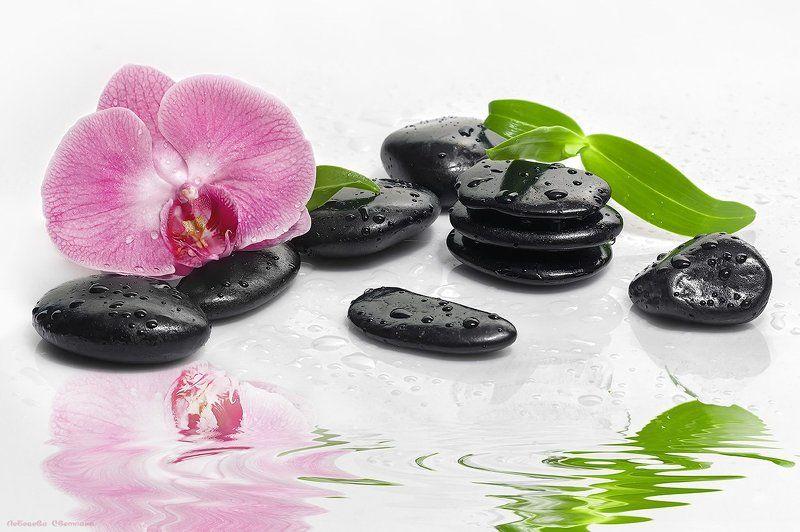 Галька, Камни, Орхидея, Цветок С орхидеямиphoto preview