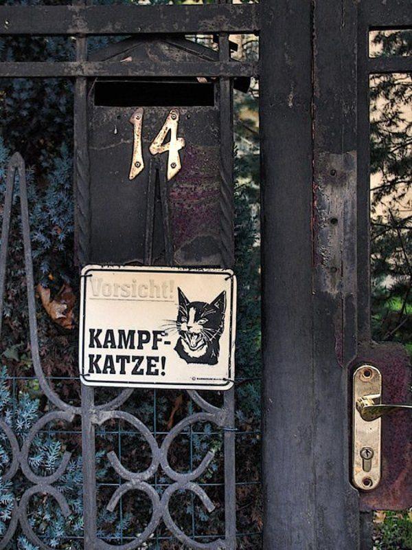 кошка, дом, улица Осторожно! Злая... Кошка!photo preview