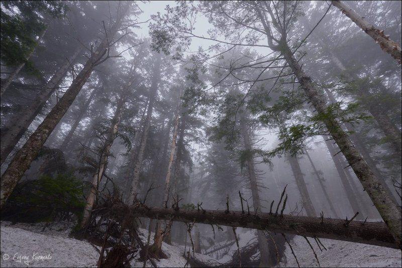 сахалин, лес В туманеphoto preview