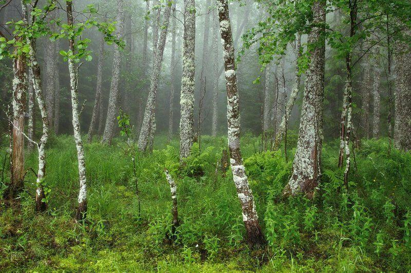 Туман в лесуphoto preview