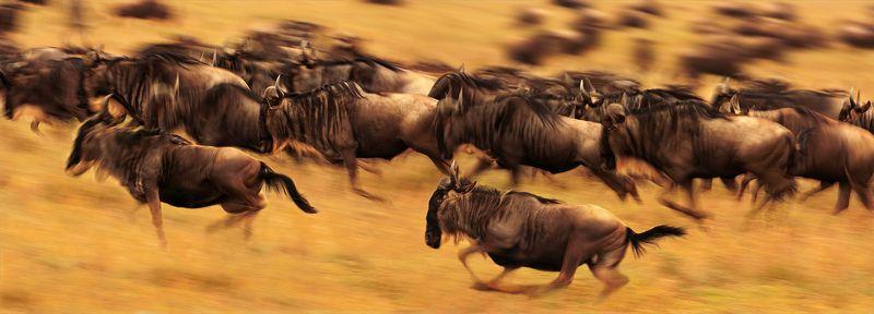 Виражи Великой миграцииphoto preview