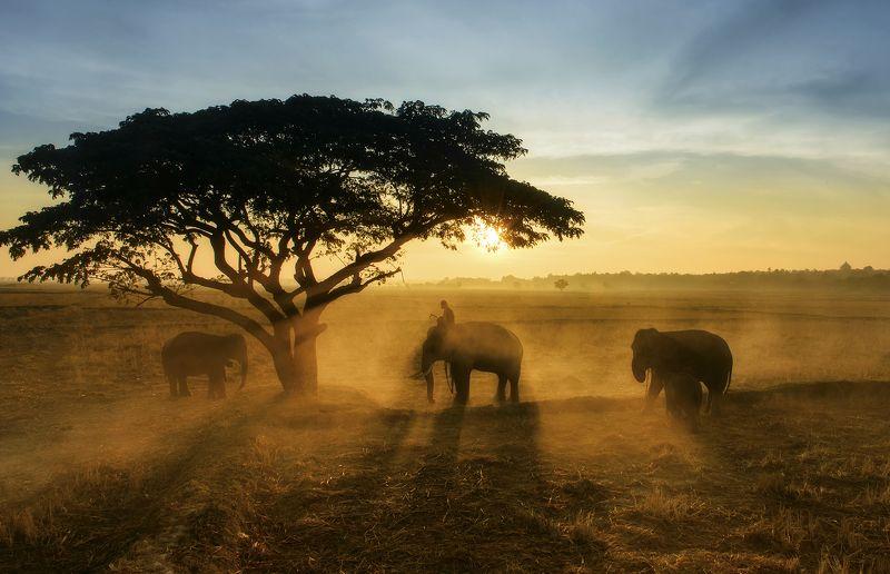 Animals, Asia, Asian, Elephant, Life, Sun, Sunlight, Sunrise, Sunset, Thai, Thailand, Travel, Tree, Wildlife Thai elephant in the mistphoto preview