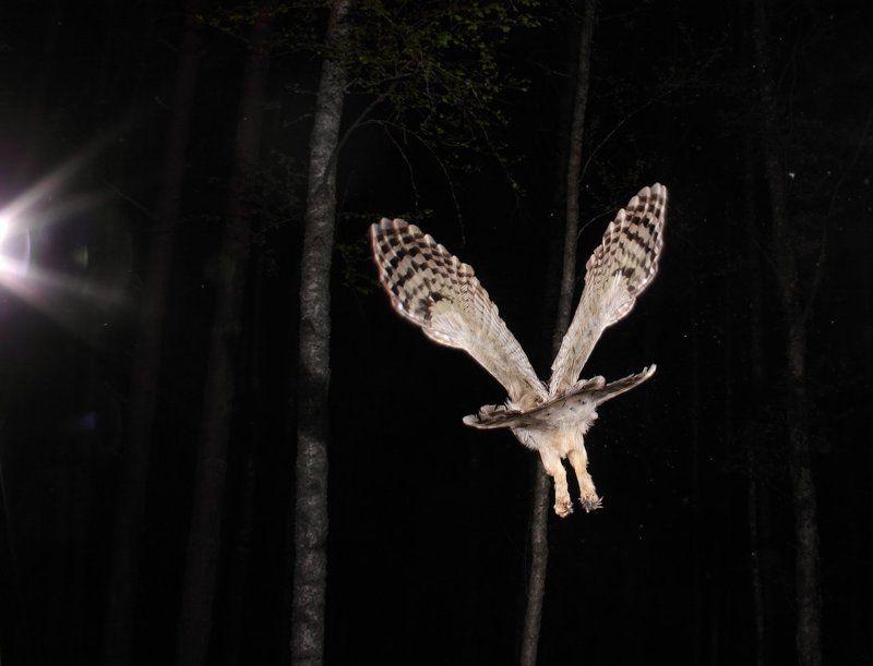 Эпюр ночного планированияphoto preview