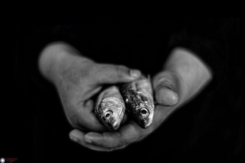 iraq hand fish photo preview
