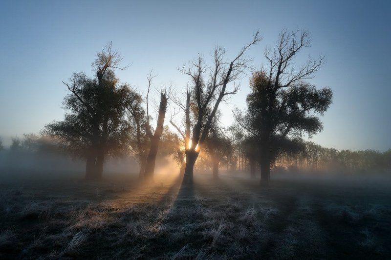 Вчера туман, сегодня вдруг морозыphoto preview