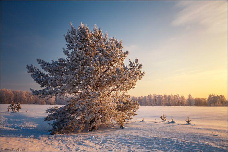 аня графова, мороз, нсо, утро Морозное утроphoto preview