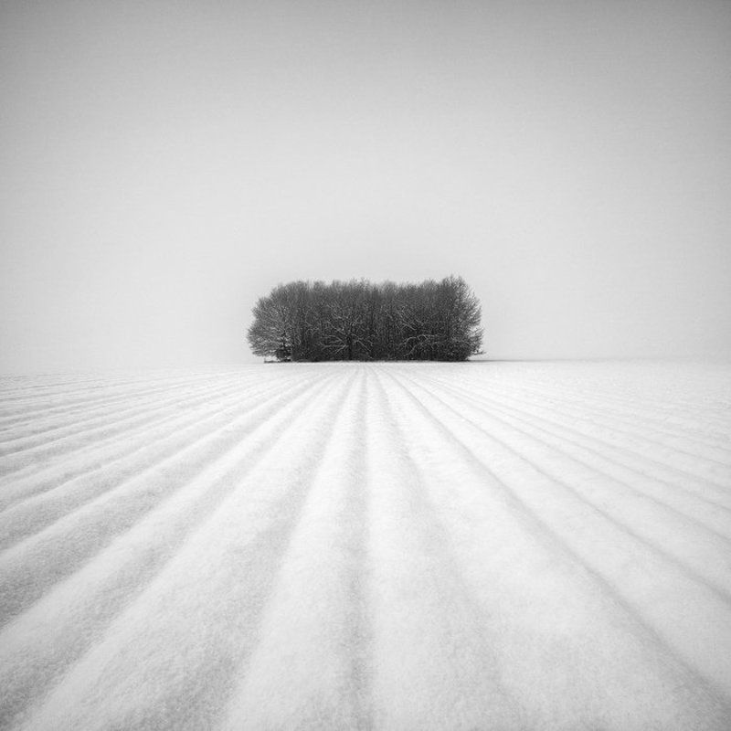 Black and white, Grove, Lines, Minimalism, Snow, Snowscape, Trees, Winter Winter Grovephoto preview