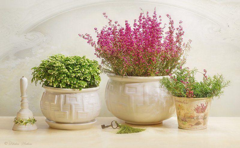 прованс,цветы,розы,вереск В стиле провансphoto preview