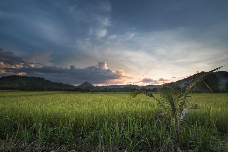 Филиппниы, закат, рисовое поле Rice sunsetphoto preview
