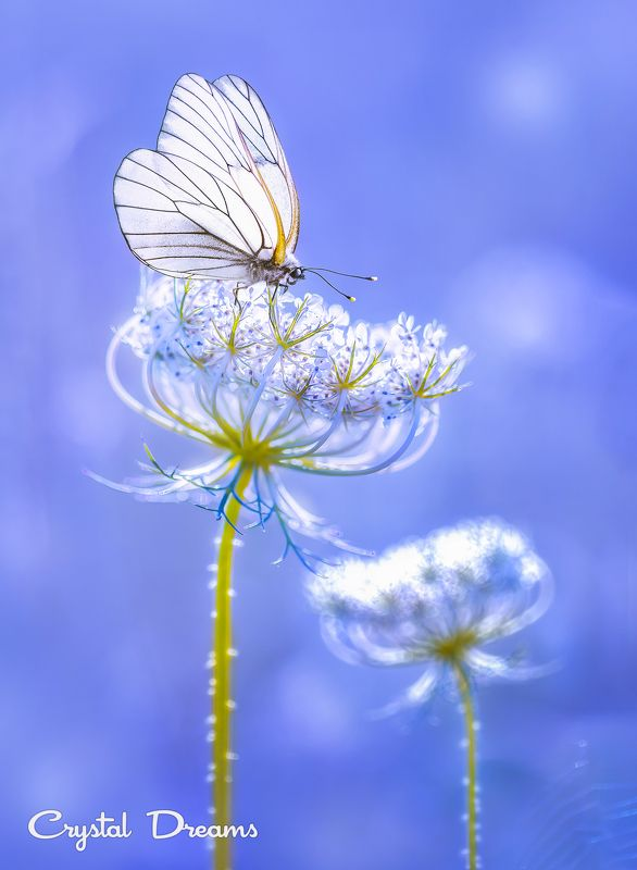 Art, Bokeh, Butterfly, Color, Crystal Deams, Light, Macro, Meadow, Nature \